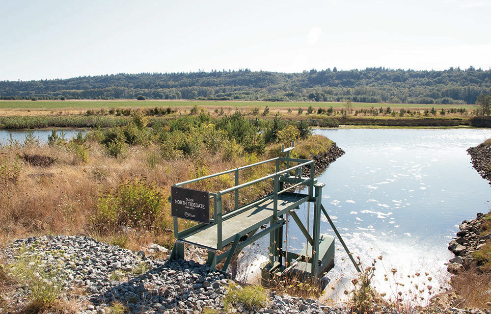 Marsh restoration protects salmon habitat and agricultural needs