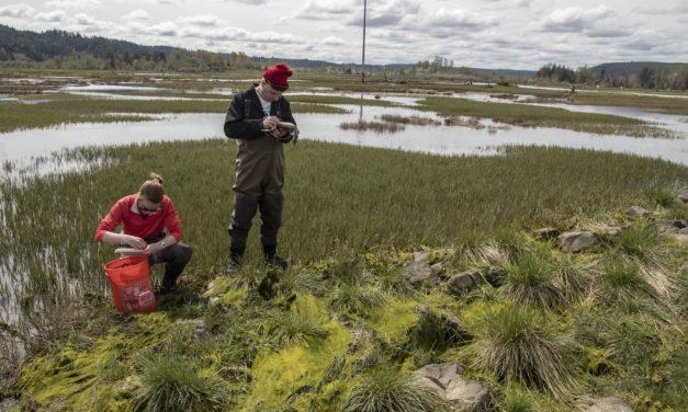 Fish, Plants Thrive in Restored Skokomish Estuary