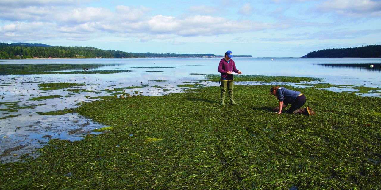 ANeMoNe Project Helps Jamestown S'Klallam Tribe Track Ocean Acidification