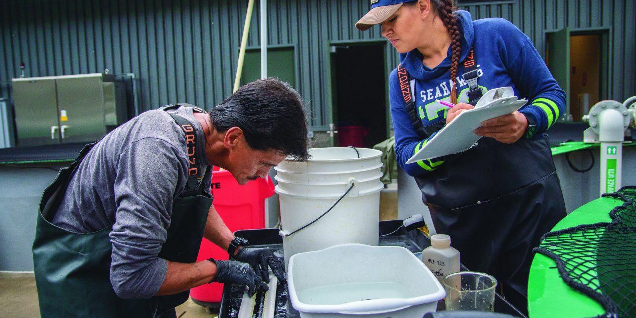Skokomish Tribe, Tacoma Power Partner to Support Sockeye Salmon Program