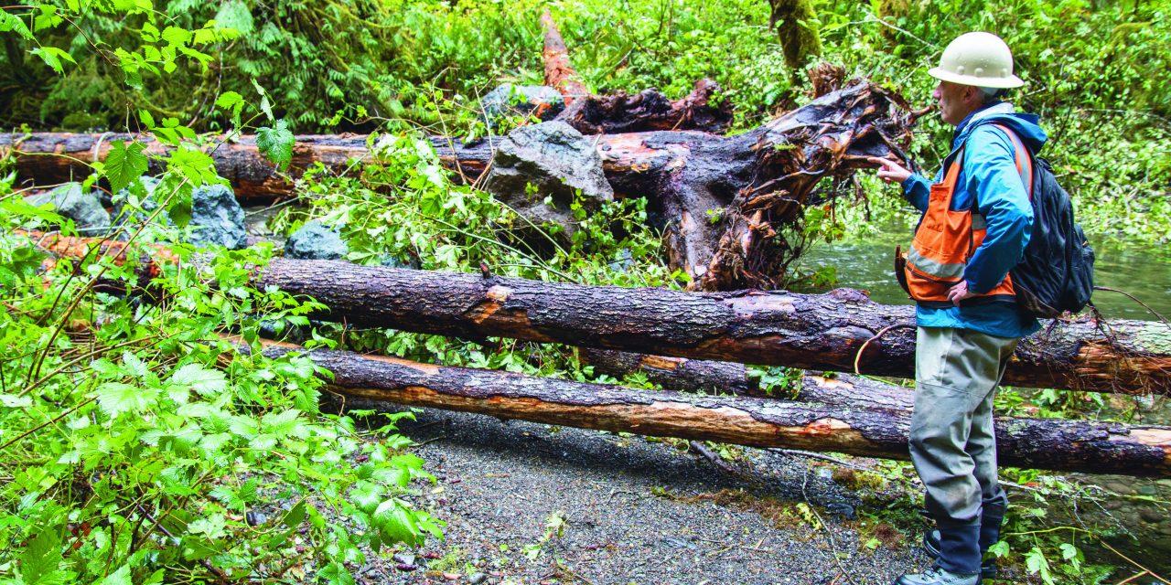 Lower Elwha Klallam Tribe enhances Olympic Peninsula streams with logs and rocks for salmon, lamprey habitat
