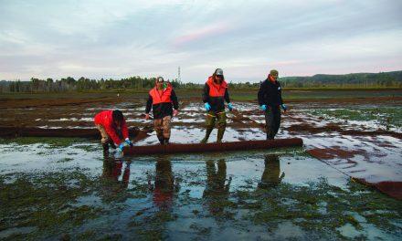 Burrowing Shrimp Degrading Shellfish Beds in Skokomish Estuary