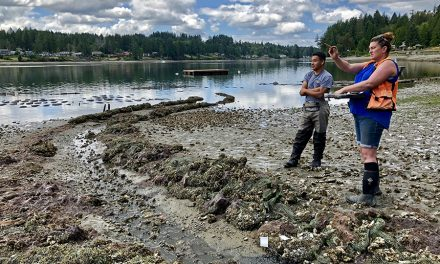 Squaxin Island Tribe Celebrates Community Effort Allowing Reopening of Harvest on Beach