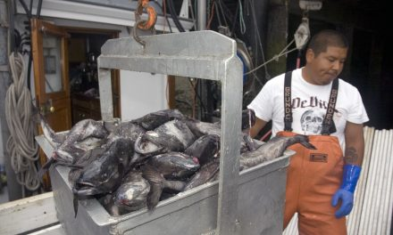 Groundfish Management Shows Way to Recovery