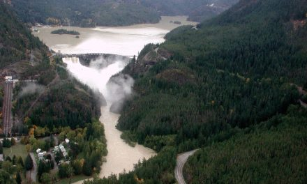 Skagit Salmon Pay the Price for Hydropower