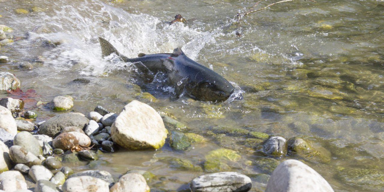 An Update on the Salmon Season Setting Process