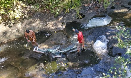 Lummi fishermen return to ancestral fishing grounds