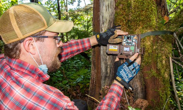 Wildlife Cameras to Photograph Bears, Cats, Coyotes, Deer and Elk