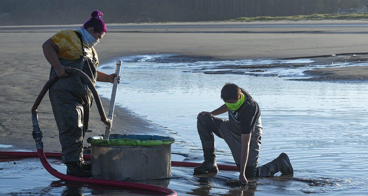 Robust Razor Clam Populations Greet QIN Diggers