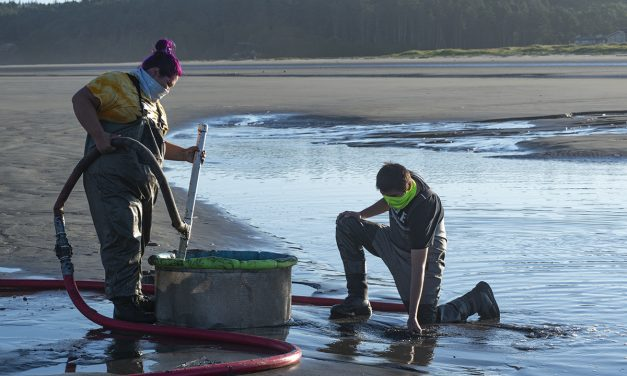 Robust Razor Clam Populations Greet QIN Diggers