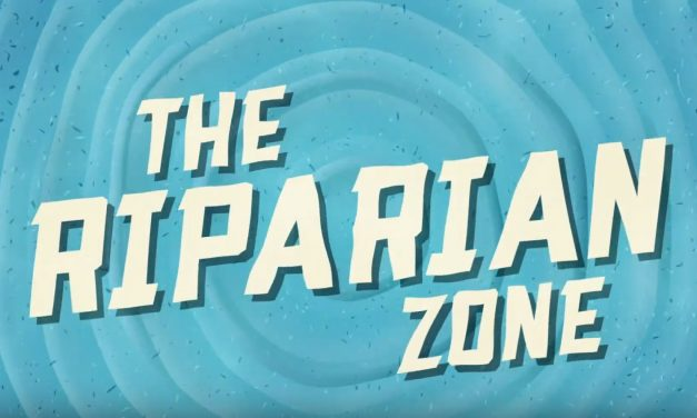 Welcome to the Riparian Zone