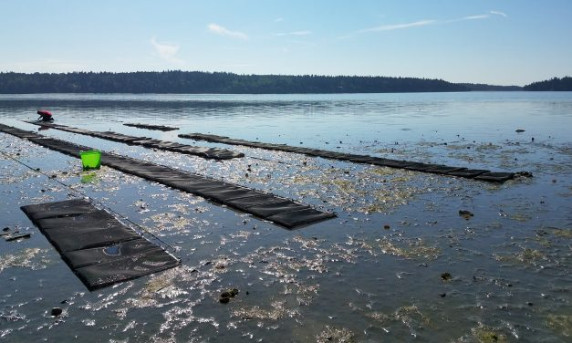 Swinomish Shellfish Co. Focuses on Retail