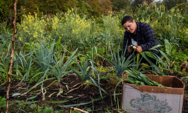 Traditional Foods, Garden Build Community