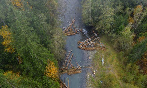 Logjams are Key to Salmon Habitat Restoration