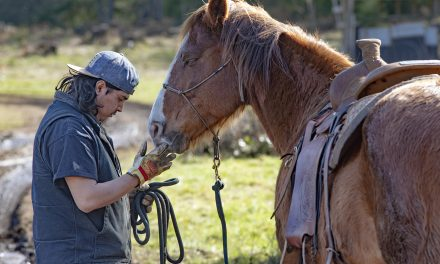 Restoring the Cultural Importance and Healing of Horses