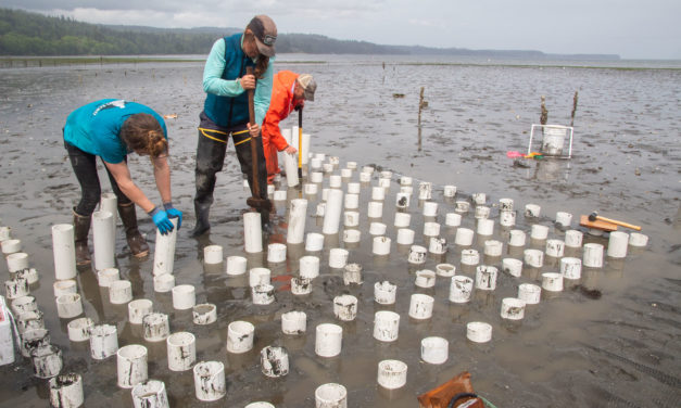 Traditional Foods Program Expands with Tidal Seafood Garden