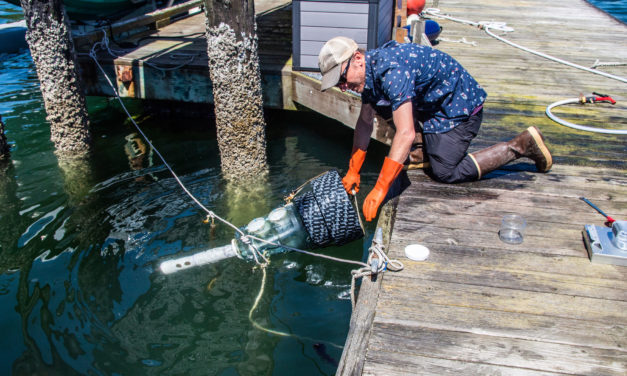 Dungeness Crab Larvae, Migration Patterns Focus of Research Group