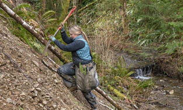Cooperative Project Improves Fish Habitat near Forks