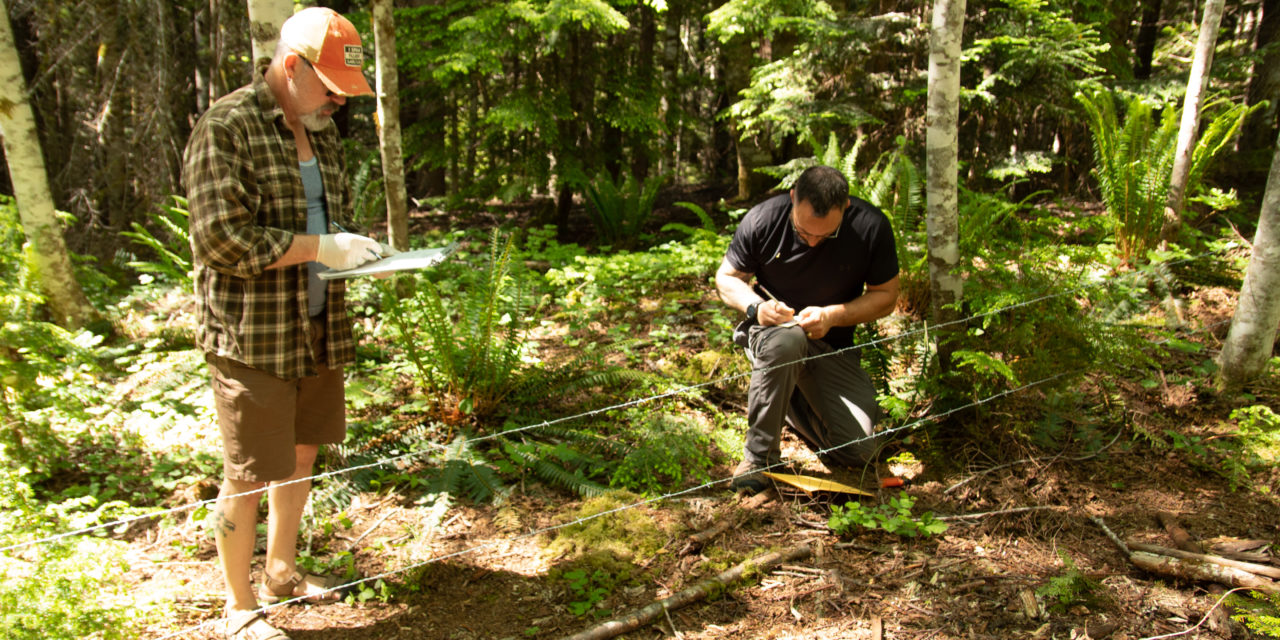 Tribes snare bear hair to learn more about population in North Cascades