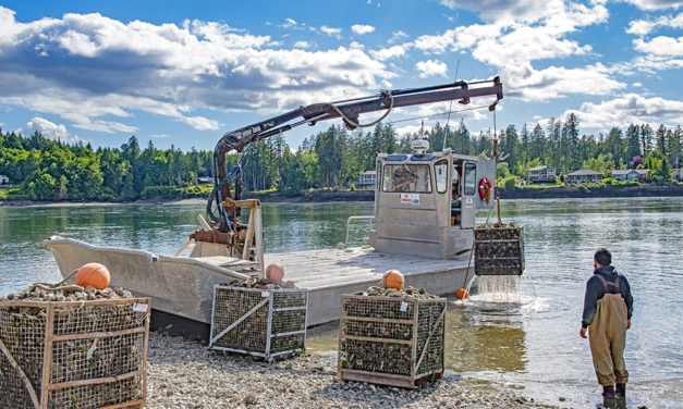 Squaxin Island Tribal Shellfish Harvests Part of Cultural Life